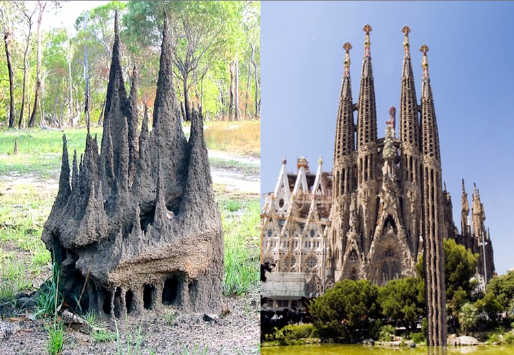 TermitesVsGaudi